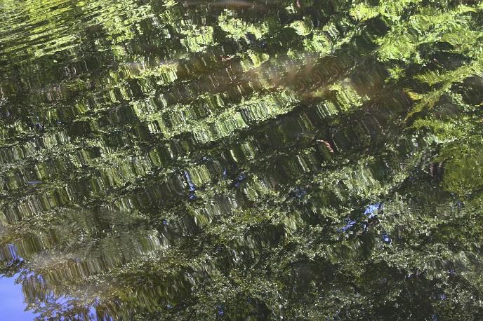 Le Roannais forêt de Lespinasse. Reflets dans l'eau d'un étang, perturbés par une onde, JM Hétru, réalité et fiction